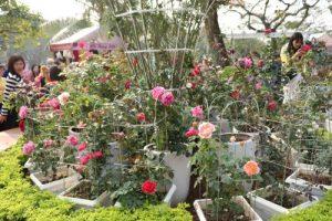 Những chậu hoa thưa thớt với những bông hoa kém sắc