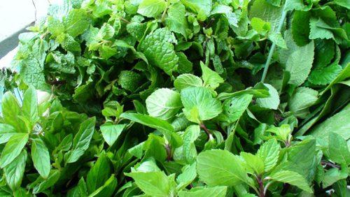 Cách bảo quản rau thơm