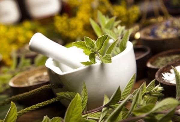 Sử dụng cây bóng nước trong các bài thuốc đông y chữa bệnh