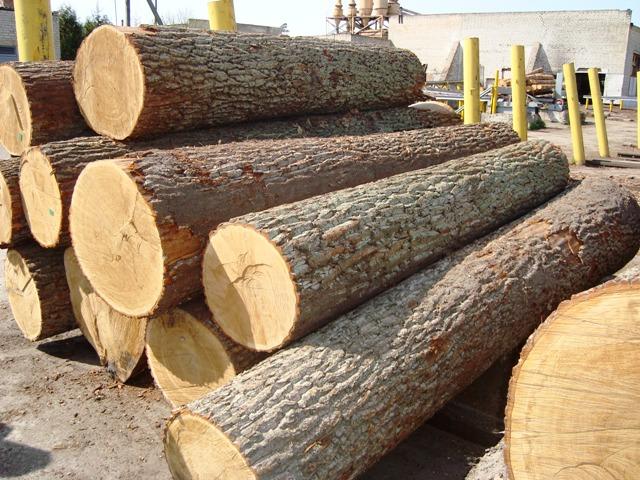 Một góc khái thác gỗ tốt chất lượng