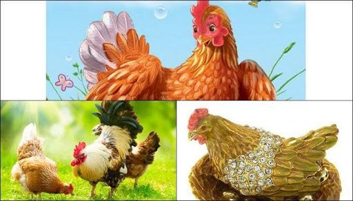 Mơ thấy gà mái có điềm báo gì?